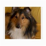 Shetland Sheepdog Small Glasses Cloth Front