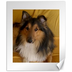 Shetland Sheepdog Canvas 8  x 10