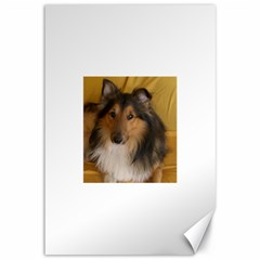 Shetland Sheepdog Canvas 12  x 18