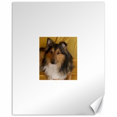 Shetland Sheepdog Canvas 16  x 20