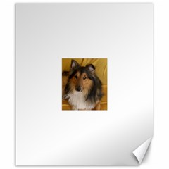 Shetland Sheepdog Canvas 20  x 24