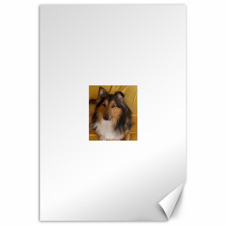 Shetland Sheepdog Canvas 20  x 30