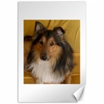 Shetland Sheepdog Canvas 24  x 36  36 x24 Canvas - 1