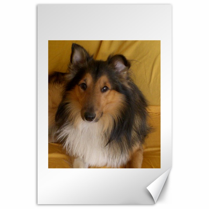 Shetland Sheepdog Canvas 24  x 36