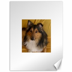 Shetland Sheepdog Canvas 36  x 48