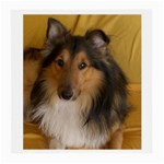 Shetland Sheepdog Medium Glasses Cloth (2-Side) Back