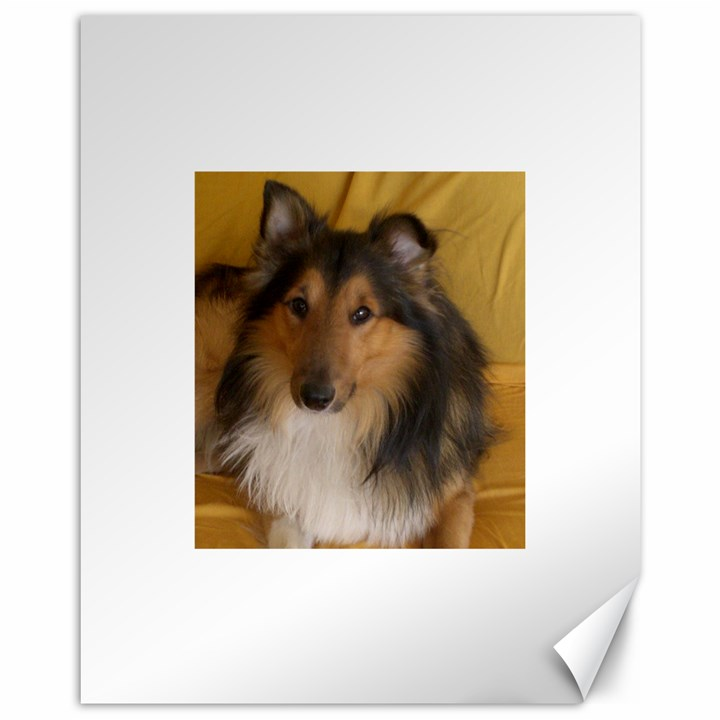 Shetland Sheepdog Canvas 11  x 14