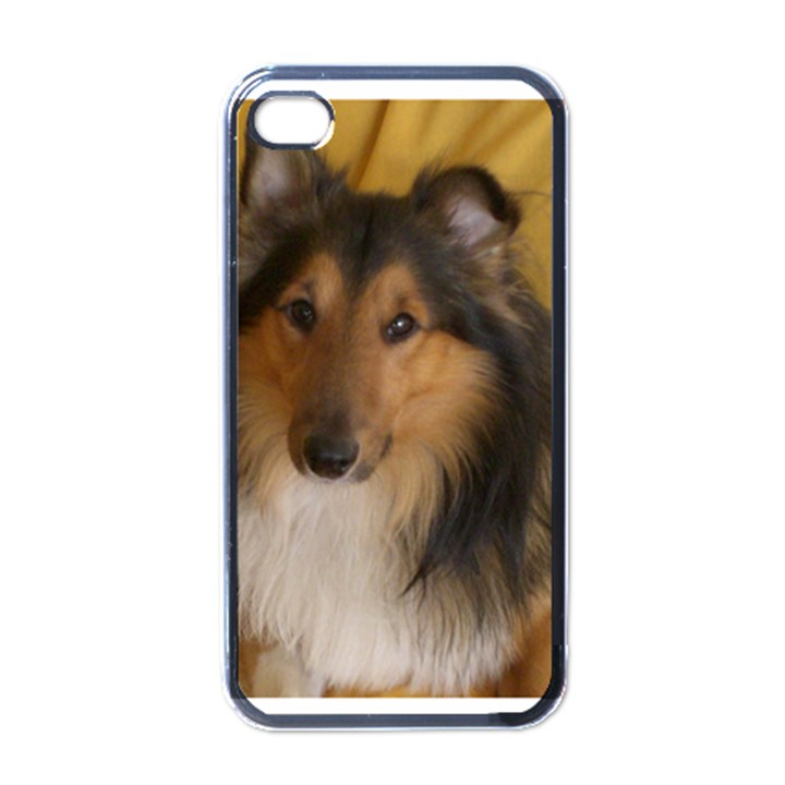 Shetland Sheepdog Apple iPhone 4 Case (Black)