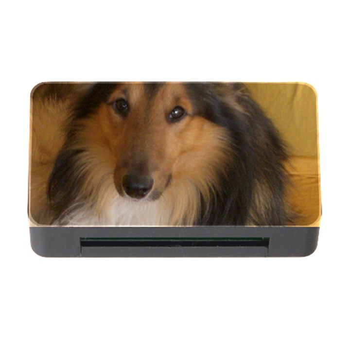 Shetland Sheepdog Memory Card Reader with CF