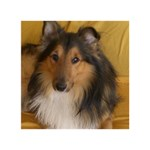 Shetland Sheepdog WORK HARD 3D Greeting Card (7x5) Back