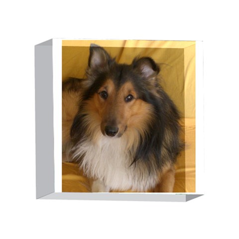 Shetland Sheepdog 4 x 4  Acrylic Photo Blocks