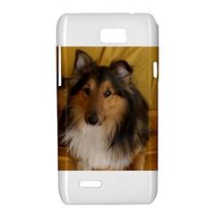 Shetland Sheepdog Motorola XT788