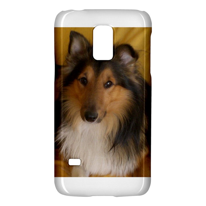 Shetland Sheepdog Galaxy S5 Mini