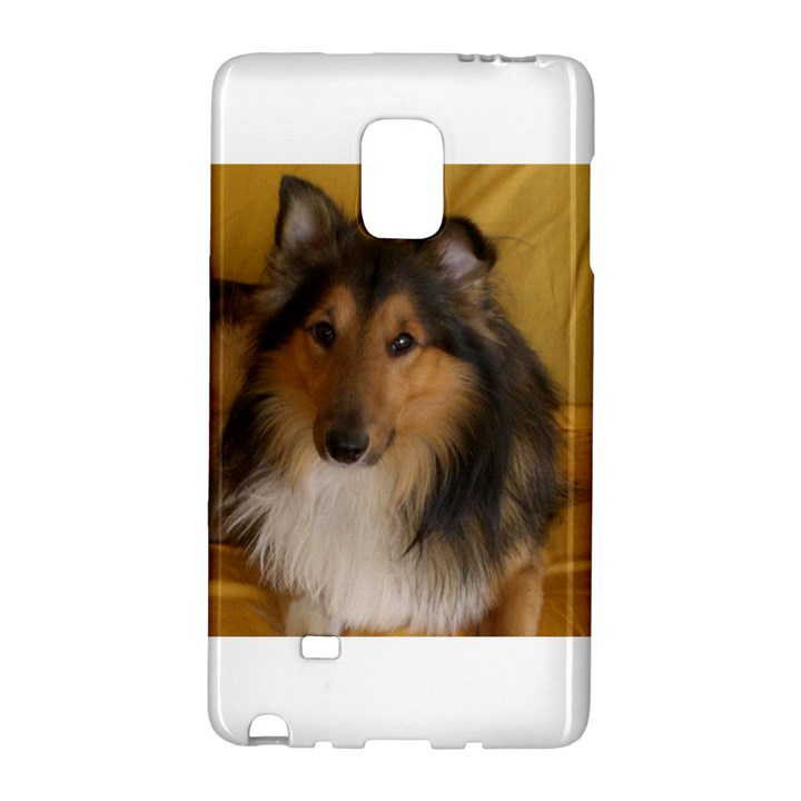 Shetland Sheepdog Galaxy Note Edge