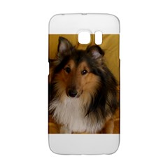 Shetland Sheepdog Galaxy S6 Edge