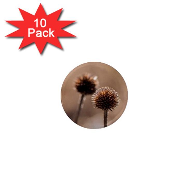 2  Verwelkte Kugeldistel 1  Mini Magnet (10 pack)