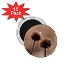 2  Verwelkte Kugeldistel 1.75  Magnets (10 pack)  Front