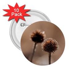 2  Verwelkte Kugeldistel 2.25  Buttons (10 pack)