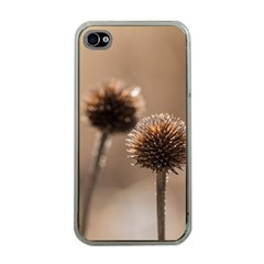 2  Verwelkte Kugeldistel Apple iPhone 4 Case (Clear)