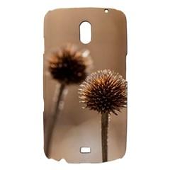 2  Verwelkte Kugeldistel Samsung Galaxy Nexus i9250 Hardshell Case