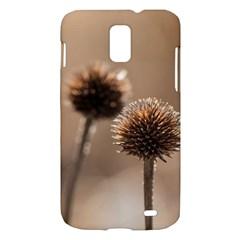 2  Verwelkte Kugeldistel Samsung Galaxy S II Skyrocket Hardshell Case