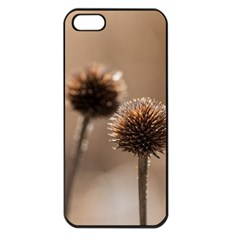 2  Verwelkte Kugeldistel Apple iPhone 5 Seamless Case (Black)