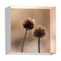 2  Verwelkte Kugeldistel 5  x 5  Acrylic Photo Blocks