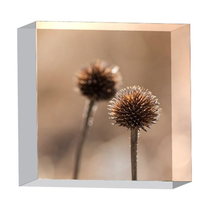 2  Verwelkte Kugeldistel 5  x 5  Acrylic Photo Blocks