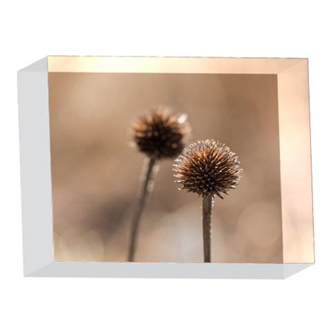 2  Verwelkte Kugeldistel 5 x 7  Acrylic Photo Blocks