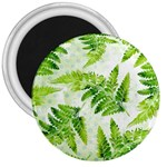 Fern Leaves 3  Magnets Front