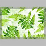 Fern Leaves Canvas 18  x 12  18  x 12  x 0.875  Stretched Canvas