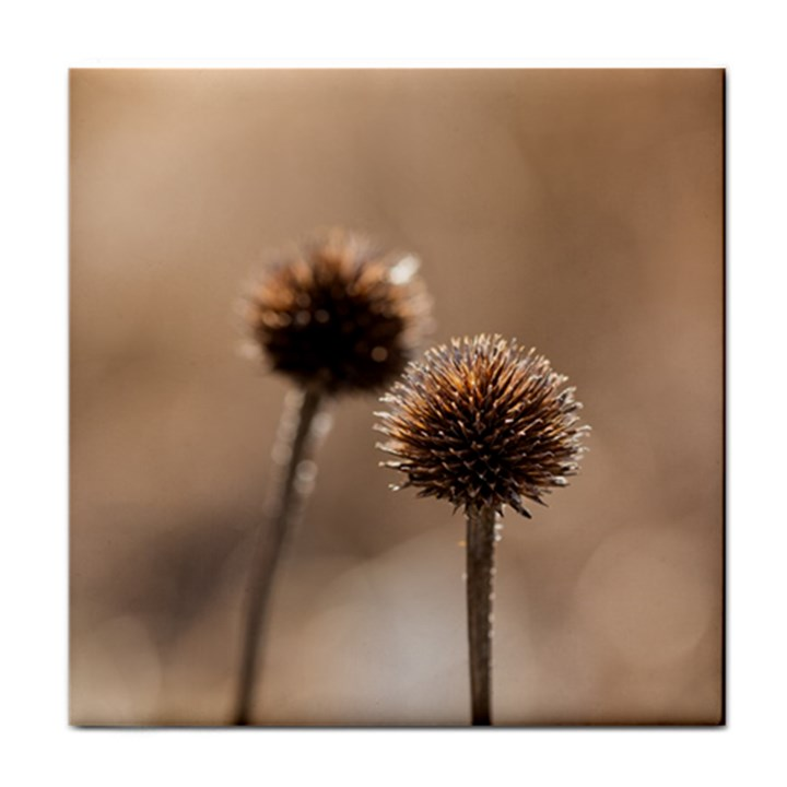 Withered Globe Thistle In Autumn Macro Tile Coasters