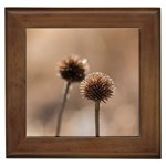 Withered Globe Thistle In Autumn Macro Framed Tiles Front
