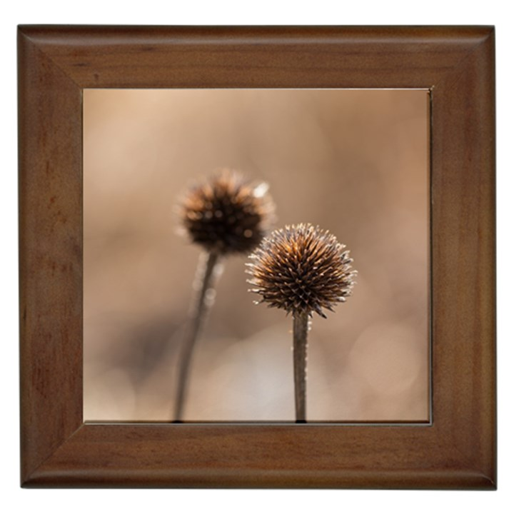 Withered Globe Thistle In Autumn Macro Framed Tiles