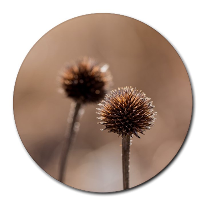 Withered Globe Thistle In Autumn Macro Round Mousepads