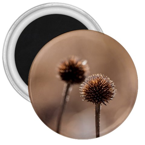 Withered Globe Thistle In Autumn Macro 3  Magnets