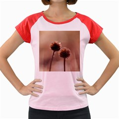 Withered Globe Thistle In Autumn Macro Women s Cap Sleeve T Shirt
