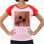 Withered Globe Thistle In Autumn Macro Women s Cap Sleeve T-Shirt Front