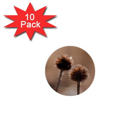 Withered Globe Thistle In Autumn Macro 1  Mini Buttons (10 pack)