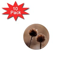 Withered Globe Thistle In Autumn Macro 1  Mini Magnet (10 Pack)