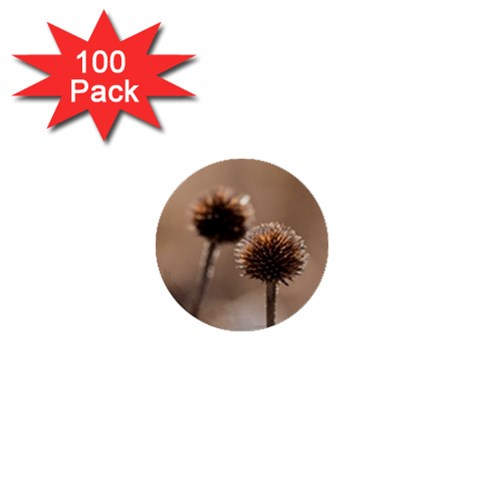 Withered Globe Thistle In Autumn Macro 1  Mini Buttons (100 pack)