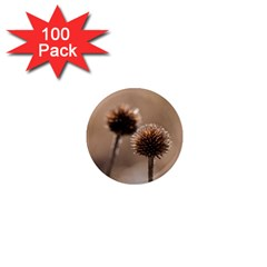 Withered Globe Thistle In Autumn Macro 1  Mini Magnets (100 pack)