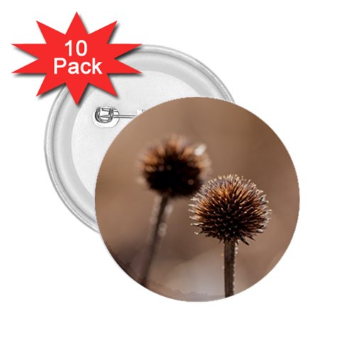 Withered Globe Thistle In Autumn Macro 2.25  Buttons (10 pack)