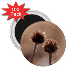 Withered Globe Thistle In Autumn Macro 2.25  Magnets (100 pack)