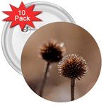 Withered Globe Thistle In Autumn Macro 3  Buttons (10 pack)  Front