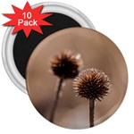 Withered Globe Thistle In Autumn Macro 3  Magnets (10 pack)  Front