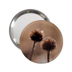 Withered Globe Thistle In Autumn Macro 2.25  Handbag Mirrors