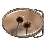 Withered Globe Thistle In Autumn Macro Belt Buckles Front