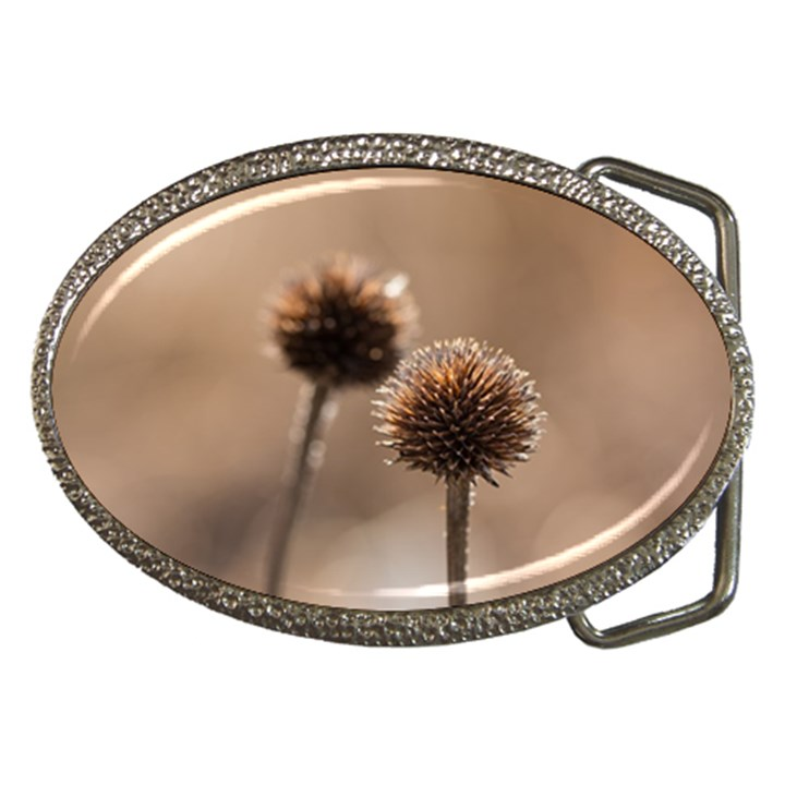 Withered Globe Thistle In Autumn Macro Belt Buckles