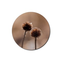 Withered Globe Thistle In Autumn Macro Rubber Round Coaster (4 pack)